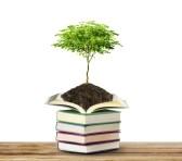 20112072-livres-avec-des-arbres-isoles-sur-fond-blanc